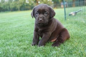 pups Dolly x Winnie 12