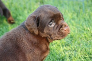 pups Dolly x Winnie 4