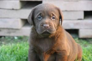 pups Dolly x Winnie 6